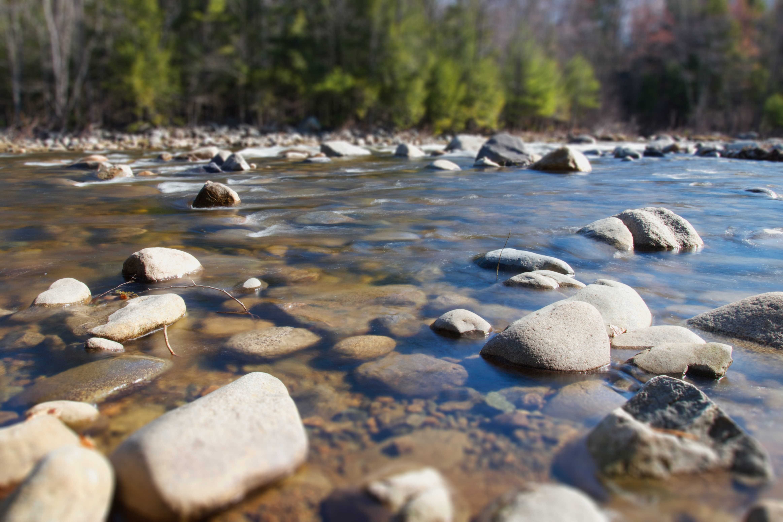 Return salmonids to Baltic rivers
