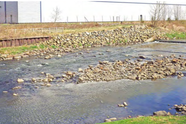 The site after three years ©Environment Agency