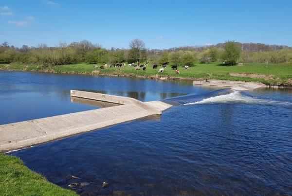 Samlesbury Weir, Ribble River, UK
